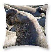 Bull Elephant Seal Battle Scars Throw Pillow