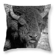 Battle Worn Bull Throw Pillow