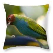 Bay-headed Tanager - Tangara Gyrola Throw Pillow
