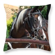 Bay Pinto Amish Buggy Horse Throw Pillow