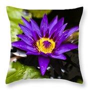 Bayou Beauty Throw Pillow by Scott Pellegrin
