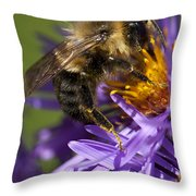 Be My Bee... Throw Pillow