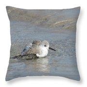 Beach Bird Bath 5 Throw Pillow