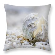 Beach Clam Throw Pillow