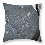 Beach Fossil Throw Pillow