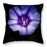 Beach Morning Glory Purple Throw Pillow