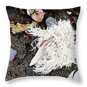 Beach Wares - Shells - Feather Throw Pillow