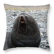 Beachmaster Throw Pillow by Ginny Barklow