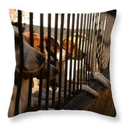 Beagles At Stowe Two Throw Pillow