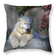 Bear 3789 Throw Pillow