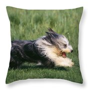 Bearded Collie Dog Throw Pillow