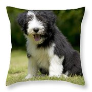 Bearded Collie Puppy Throw Pillow