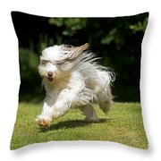 Bearded Collie Running Throw Pillow