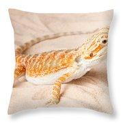 Bearded Dragon Pogona Sp. On Sand Throw Pillow