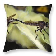 Bearded Robber Flies Throw Pillow