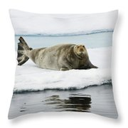 Bearded Seal On Ice Floe Norway Throw Pillow