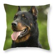 Beauceron Dog Throw Pillow