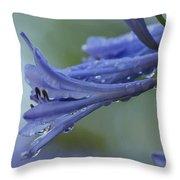 Beautiful  Agapanthus Throw Pillow