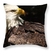 Beautiful Bald Eagle Throw Pillow