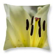 Beautiful Beauty - Featured 3 Throw Pillow