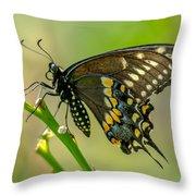 Beautiful Black Swallowtail Throw Pillow