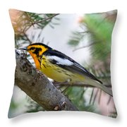 Beautiful Blackburnian Warbler Throw Pillow