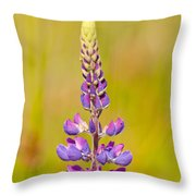 Beautiful Blooming Lupine Flower In Warm Sunlight Throw Pillow