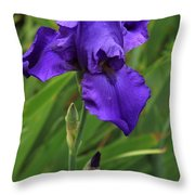 Beautiful Purple Iris Flower Art Throw Pillow