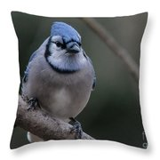 Beautiful Bluejay Throw Pillow