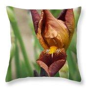 Beautiful Brown Bearded Iris Throw Pillow