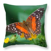 Red Anartia Butterfly 1 Throw Pillow