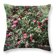 Beautiful Camellia Bush Throw Pillow