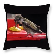 Beautiful Colored Hummingbird Throw Pillow