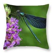 Beautiful Demoiselle Male Switzerland Throw Pillow