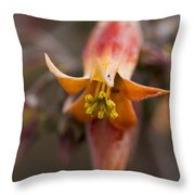 Beautiful Echeveria Bell Throw Pillow