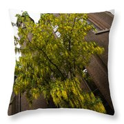 Beautiful Golden Chain Tree In Full Bloom Throw Pillow