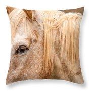 Beautiful Gray Horse Portrait Throw Pillow