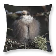 Beautiful Grey Jay Pose Throw Pillow