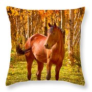 Beautiful Horse In The Autumn Aspen Colors Throw Pillow by James BO  Insogna