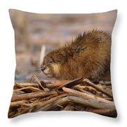 Beautiful Muskrat Throw Pillow by James Peterson
