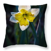 Beautiful Narcissus Throw Pillow