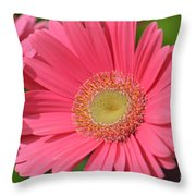 Beautiful Pink Gerber Daisies Throw Pillow