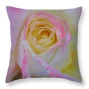 Beautiful Pink Rose Closeup  Throw Pillow