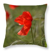 Beautiful Poppies 5 Throw Pillow