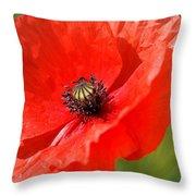 Beautiful Poppies 6 Throw Pillow
