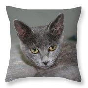 Beautiful Portait Of A Grey Russian Tabby Cat Throw Pillow