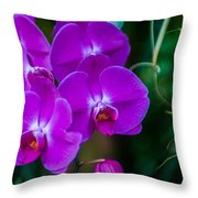 Beautiful Purple Orchid - Phalaenopsis Throw Pillow
