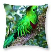 Beautiful Quetzal 2 Throw Pillow