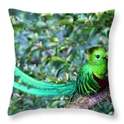 Beautiful Quetzal 3 Throw Pillow