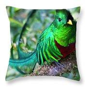 Beautiful Quetzal 4 Throw Pillow